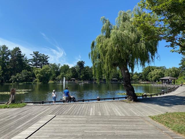きれいな常盤公園を散策します