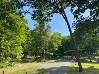近くの桜山公園で朝の散歩、蒸気機関車が2つも展示されてました