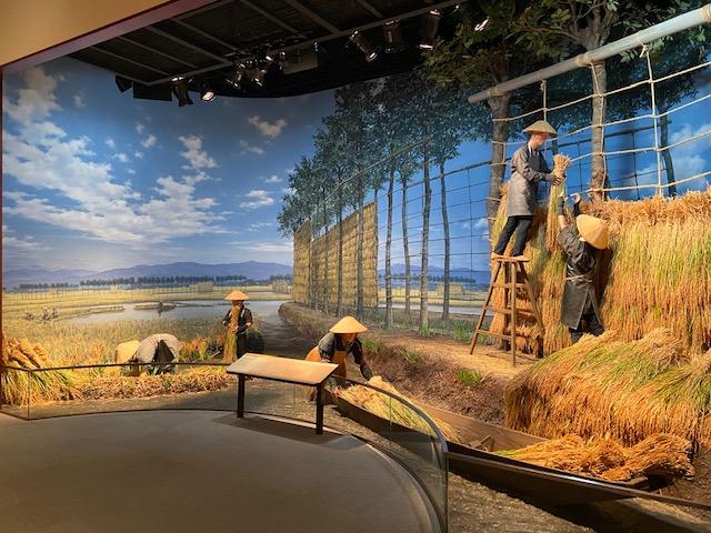 船を使った稲刈りの様子、乾いた田んぼの稲刈りとは違った環境だったんですね