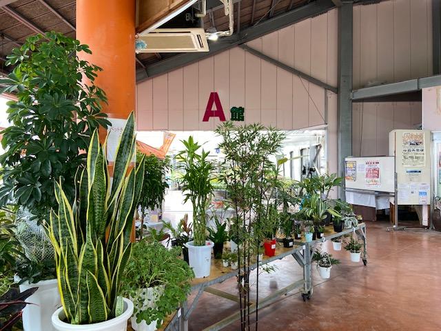 すごい種類の植物が売れれていて植物を買う人で賑わってました