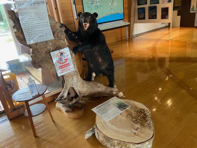 ここでは熊が出迎えてくれます、そういえば熊注意の看板がありました