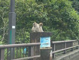 猿が普通にいます