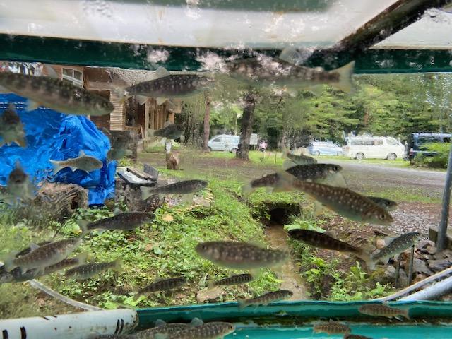野営場に到着しました、ヤマメの水槽越しにキャンプ場を見てます