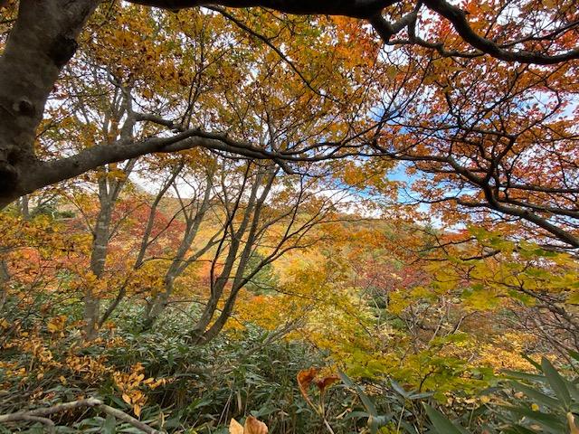 景色も開けて紅葉が綺麗に見えてきました