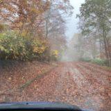標高が高くなってきて道が落ち葉の絨毯状態です