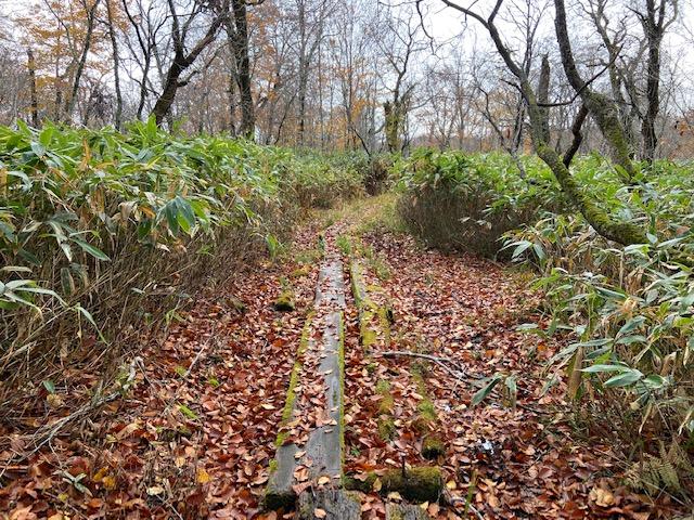 落葉の道を行きます