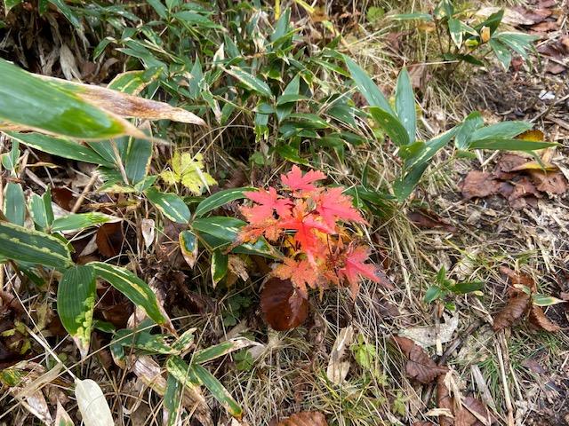 小さい秋が残ってました
