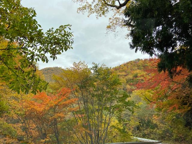照葉峡の紅葉は見ごろ