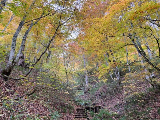 1時間くらい歩いた林はきれいです