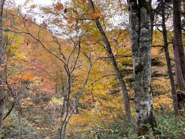 滝の先は紅葉真っ盛り