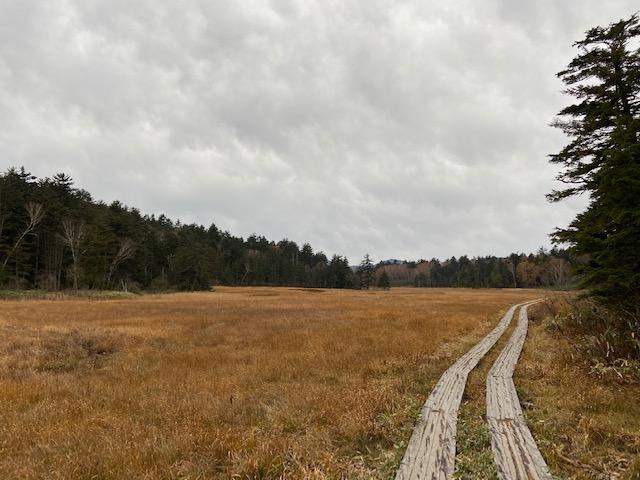 尾瀬に到着、秋の田んぼの様な景色です