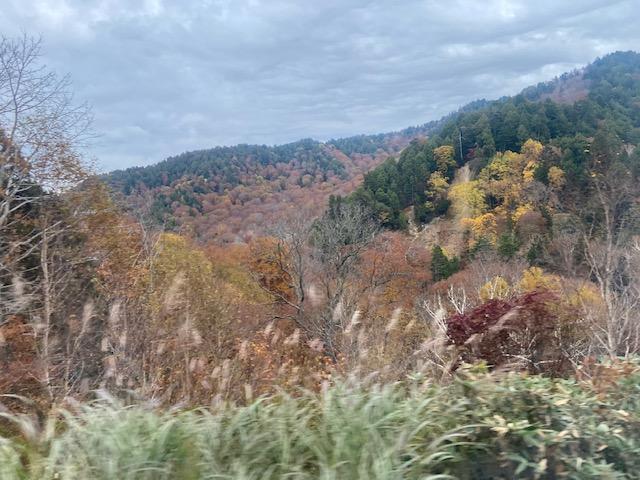 紅葉が続きますが走るバスの中からではブレブレです