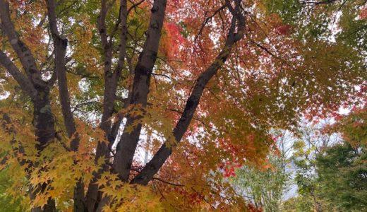 栃木県日光から群馬県片品まで紅葉を楽しむ