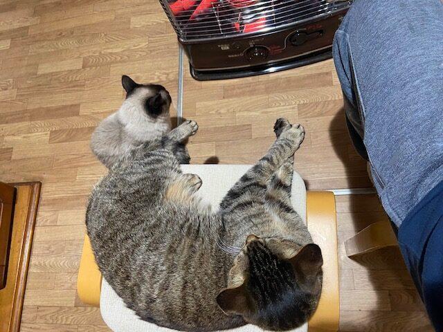 ネコとストーブの前でくつろぐ
