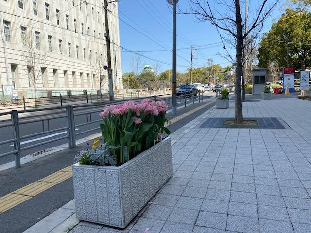 大阪城が見えてきました、綺麗な道路で花も綺麗ですね