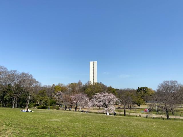桜が咲いて花見をしてる方もいます、高い塔は上から公園や古墳が見渡せるらしいですがコロナで入れません