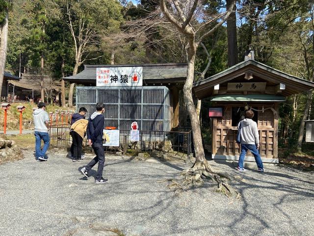 日吉大社の名物の神猿です、口の悪い観光客はただのサルじゃん
