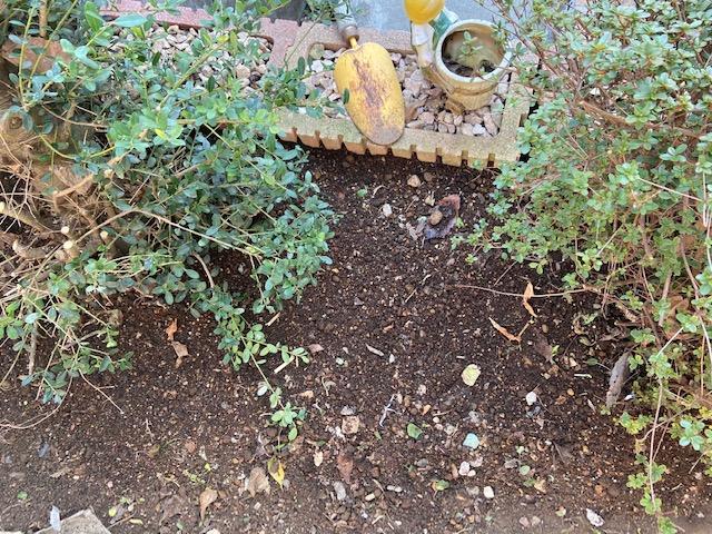 まずは雑草を抜いて土と肥料を入れます
