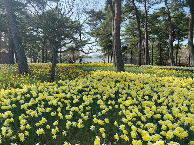 花がたくさんあるエリア