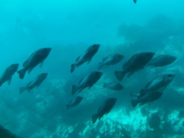 水族館と違って普段の魚の動きが見れます
