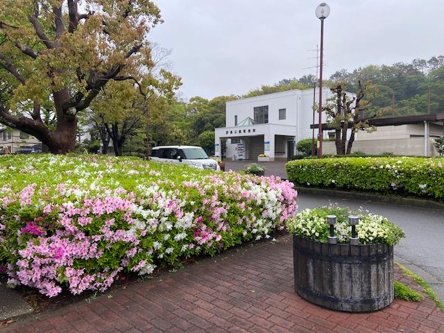 公園の花も綺麗ですね