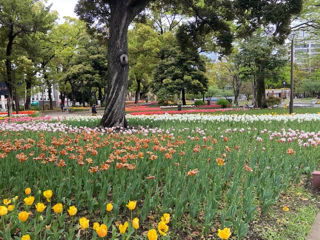 横浜公園の花壇です