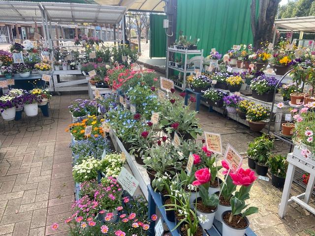 お店も多くて花が欲しかったんですがもう一泊あるのであきらめ